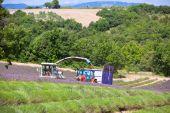Levandulová pole sklizeň v Provence, Francie