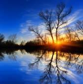 Tree near water on sunset background