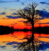 Alone tree in dusk