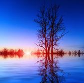 Tree on sunset background sky