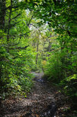 Forest trail, Primorye, Russia