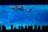 Okinawa Churaumi akvárium