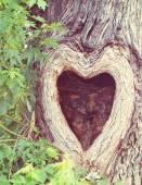 Tree with knothole shaped like heart