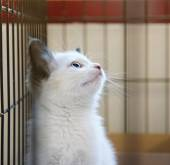 Kotě v útulku