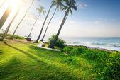 Grass and ocean