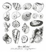 Isolated hand drawn illustrations of seashells