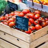 Jen sklizeň rajčat k prodeji na místní farmě na trhu. Kodaň, Dánsko