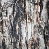 Dark tree bark