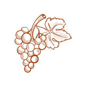 Illustration of hand drawn grapes, doodle style