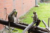 Opičí rodina na jíst