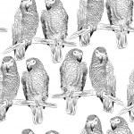 Постер, плакат: Parrot