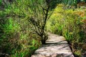 Wooden boardwalk across scenic green woods. Forest landscape