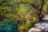 Wooden boardwalk across scenic green woods along azure lake