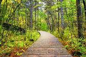 Wooden boardwalk across forest, Jiuzhaigou National Park, China