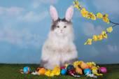 Macska a ruha nyuszi Húsvét ünnepli