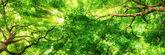 Sunrays shining through high treetops