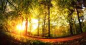 Gold lit forest path at sunset