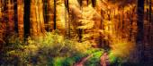 Autumn forest with warm rays of light