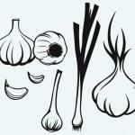 Постер, плакат: Heads of garlic