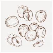 Illustration set of drawing apples Golden delicious Hand draw illustration set apples for design