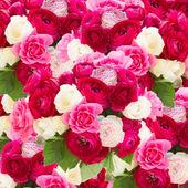 Rózsaszín ranunculus virágcsokor