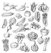 Ručně kreslenou zelenina