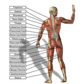 Muž se svaly a textem