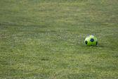Izolované fotbalový míč na zelené trávě