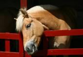 Niedliche Pferdekopf