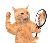 Gatto che esamina lo specchio e vedere un riflesso di un leone