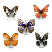 Collection of vector colorful butterflies for design