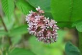 Michigan vad virágok a növény