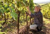 člověk, který pracoval na vinici
