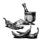 Vector  illustration of a paprika stylized as engraving