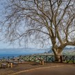 Постер, плакат: Beautiful viewpoint in the mountains of Madeira island