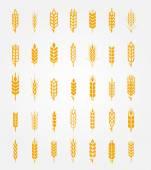 Vector wheat ears icons set
