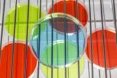 Petriho misky v inkubátoru