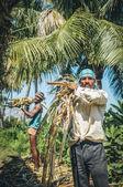 Indičtí dělníci