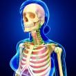 Постер, плакат: Lymphatic skeletal and respiratory system of Female body artwor