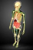Lymfatický, kosterní a trávicí systém lidského těla kresby