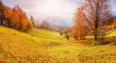 Rock massif in the Carpathians. Carpathian, Ukraine, Europe.