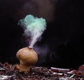 Spóry houba pýchavka