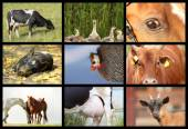 Podrobnosti s hospodářskými zvířaty