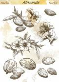 Almonds set of vector sketches on an abstract background