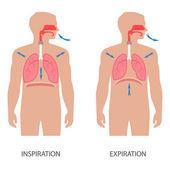 Dýchací systém