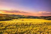 Tuscany spring, rolling hills and wheat on sunset. Siena rural l