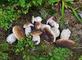 Bílé houby na trávě v lese