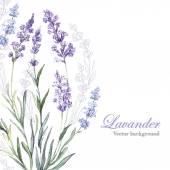 Akvarel levandulový pozadí