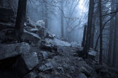 Rocky path through old foggy forest at night
