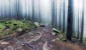 Panorama of rocky path through old foggy forest